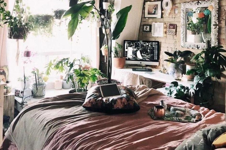 卧室适合养什么花